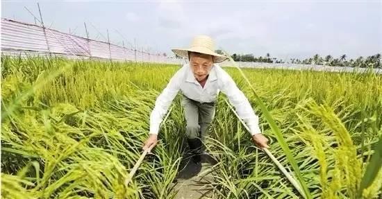 袁隆平豪宅首度曝光,这个老人不一般 - 周公乐 - xinhua8848 的博客