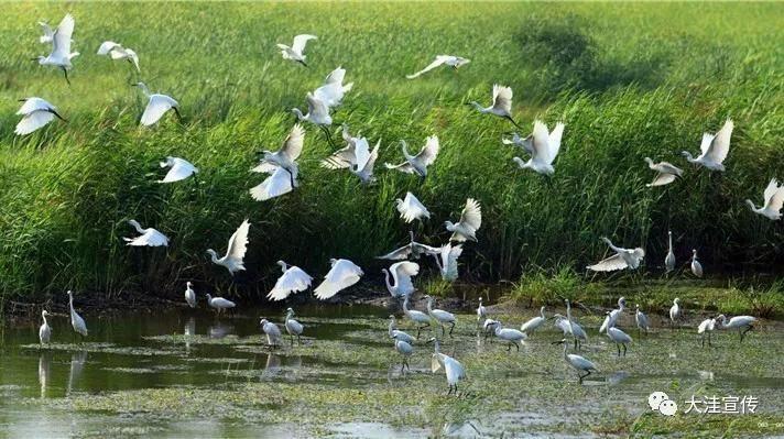 尹维华:用镜头向世界诠释家乡湿地美