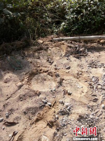 西双版纳现野象袭击机动车事件 事发路段已封锁