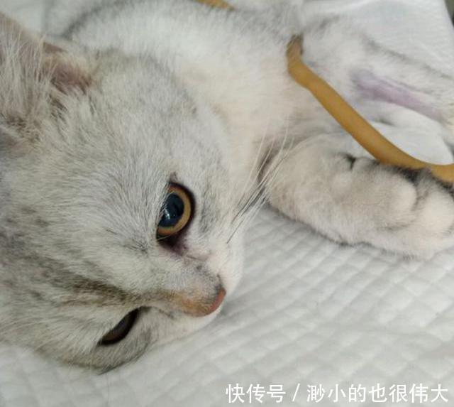 带猫咪去做绝育,回家发个朋友圈,心瞬间凉了!
