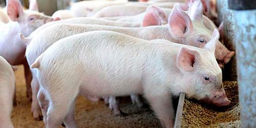警惕居民部门杠杆率扩张 猪价强势反弹未到时机