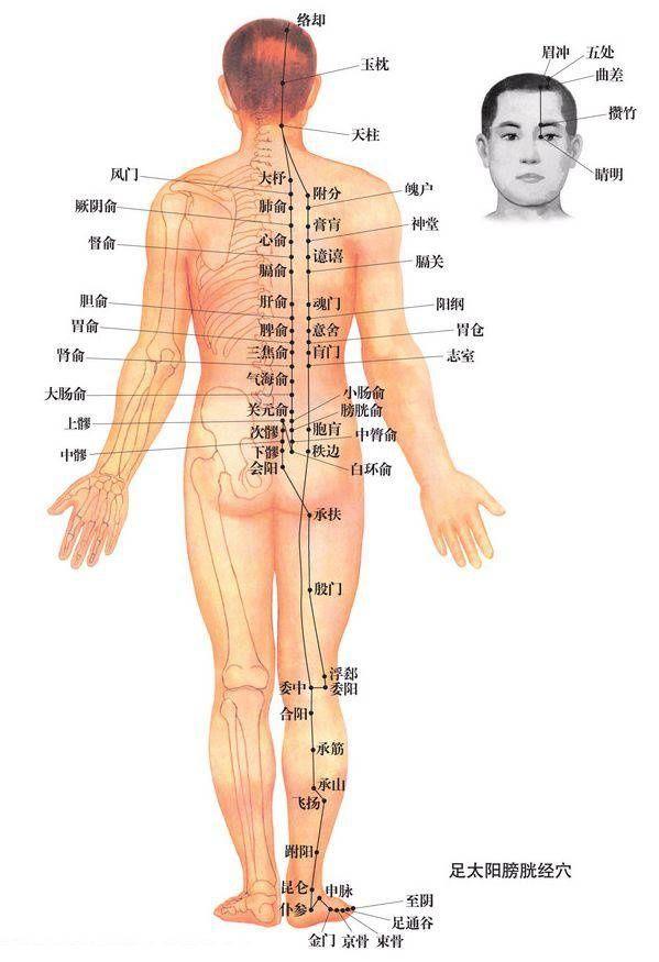 下午做点小动作,疏通人体最大的排毒通道--膀胱经
