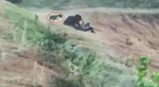 印度男子与熊自拍被咬死 多人围观拍视频不敢相救