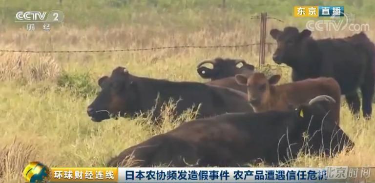 """新葡京娱乐:日本又出造假丑闻!这一连次""""神户牛肉""""也沦陷了"""