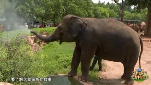 亚洲象与非洲象的区别